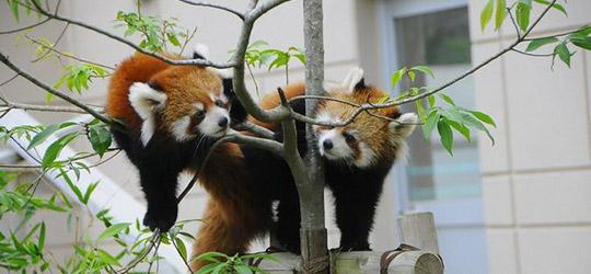 三段池動物園